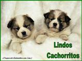 Lindos Cachorritos